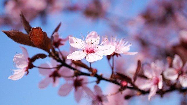 f:id:haruusagi_kyo:20200405203610j:plain