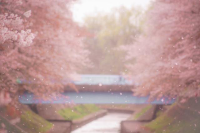 f:id:haruusagi_kyo:20210224065430j:plain
