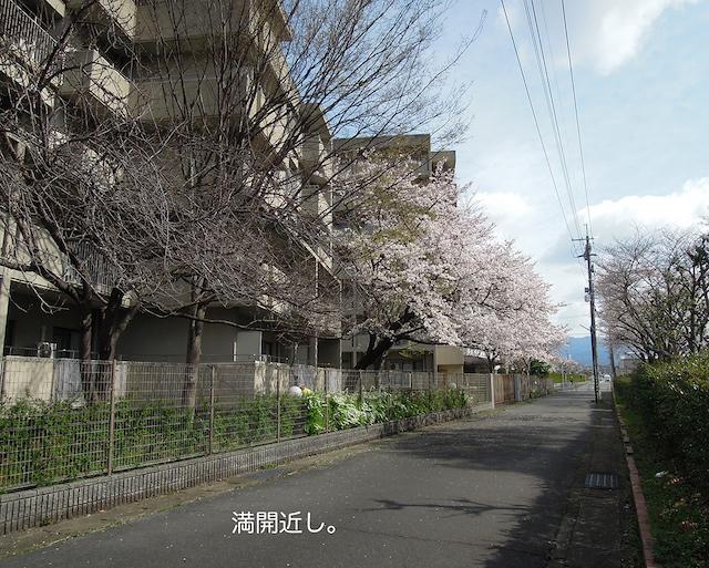 f:id:haruusagi_kyo:20210322185155j:plain
