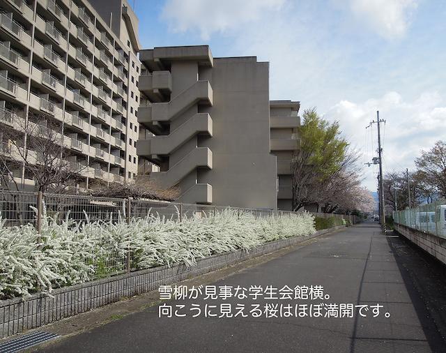 f:id:haruusagi_kyo:20210322185219j:plain