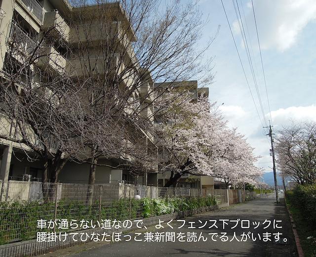 f:id:haruusagi_kyo:20210322185244j:plain