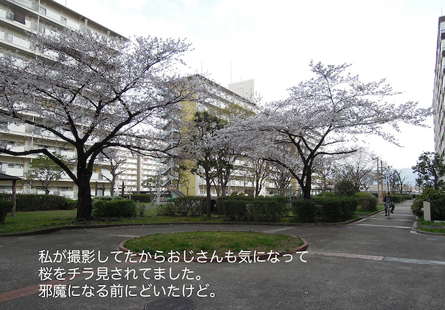 f:id:haruusagi_kyo:20210322185334j:plain