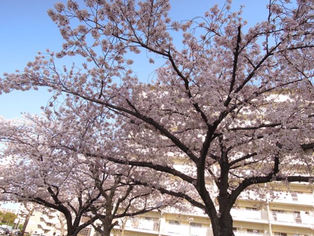 f:id:haruusagi_kyo:20210331182055j:plain