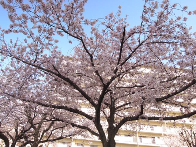 f:id:haruusagi_kyo:20210331182107j:plain