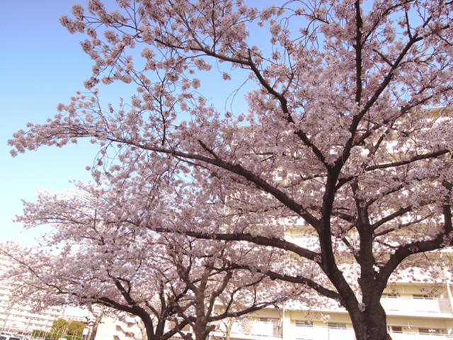f:id:haruusagi_kyo:20210331182119j:plain
