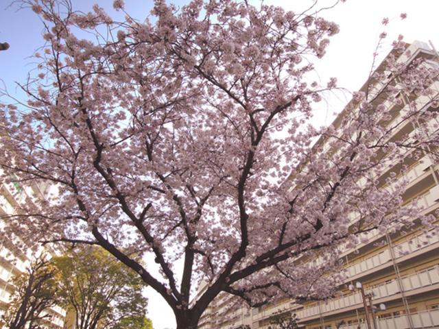 f:id:haruusagi_kyo:20210331182130j:plain