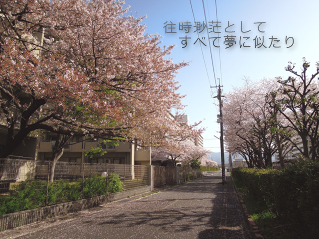 f:id:haruusagi_kyo:20210331182215j:plain