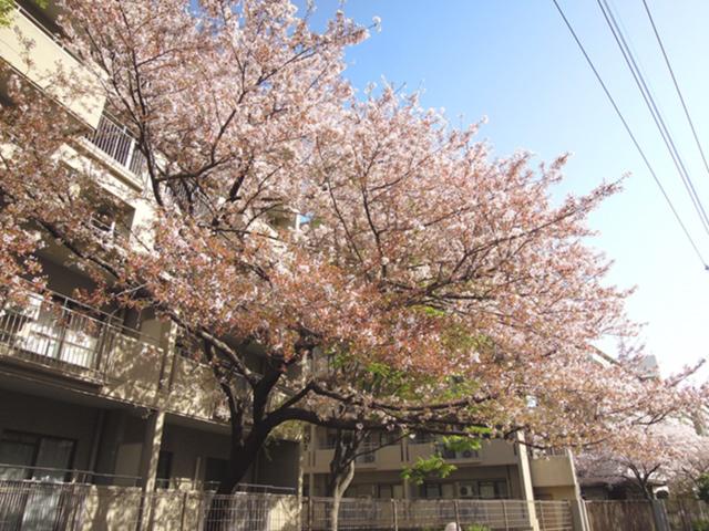 f:id:haruusagi_kyo:20210331182228j:plain