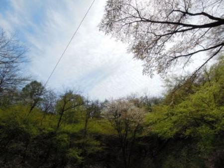 f:id:haruyuki0405:20120429210822j:image