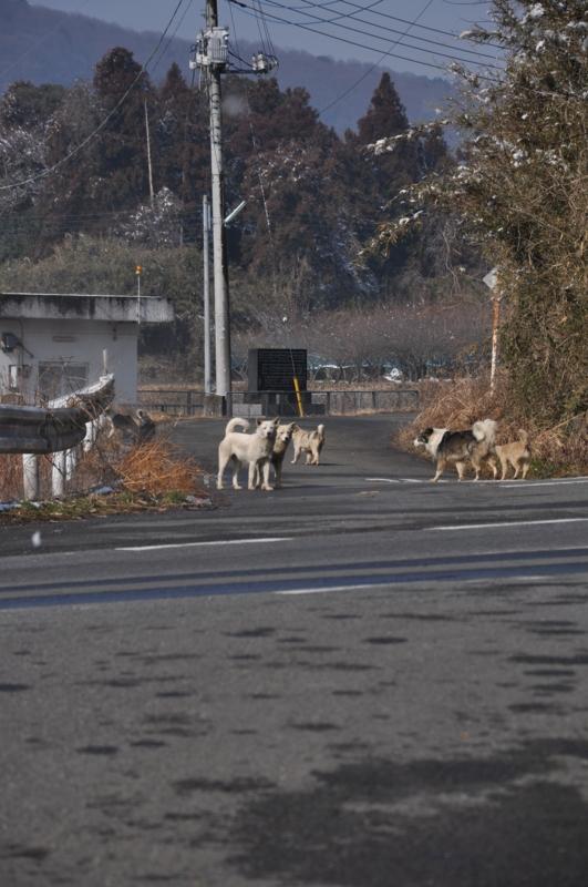 個別「野犬の群れ」の写真、画像、動画 - ハートラン - harveys's ...