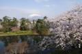 桜の弘前城から望む岩木山