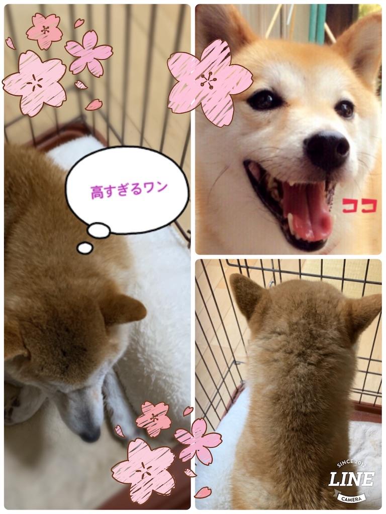 f:id:hashimoto_clinic:20210317110637j:image