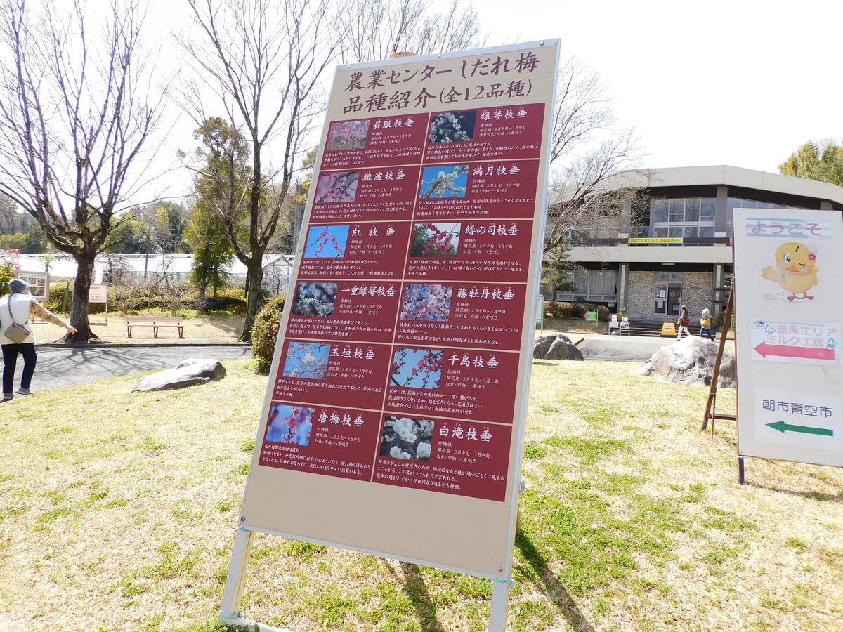 f:id:hashimoto_neko:20210323234710j:plain