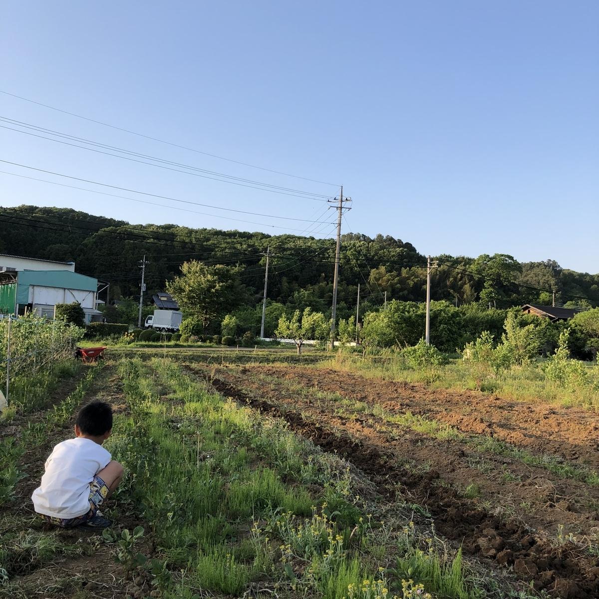f:id:hashimotoyoko:20200603041554j:plain