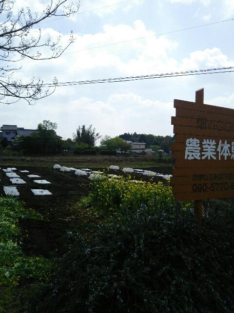 f:id:hatakenogochiso:20180419124741j:image