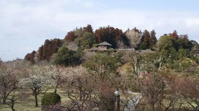 f:id:hatakenogochiso:20190529201934j:image