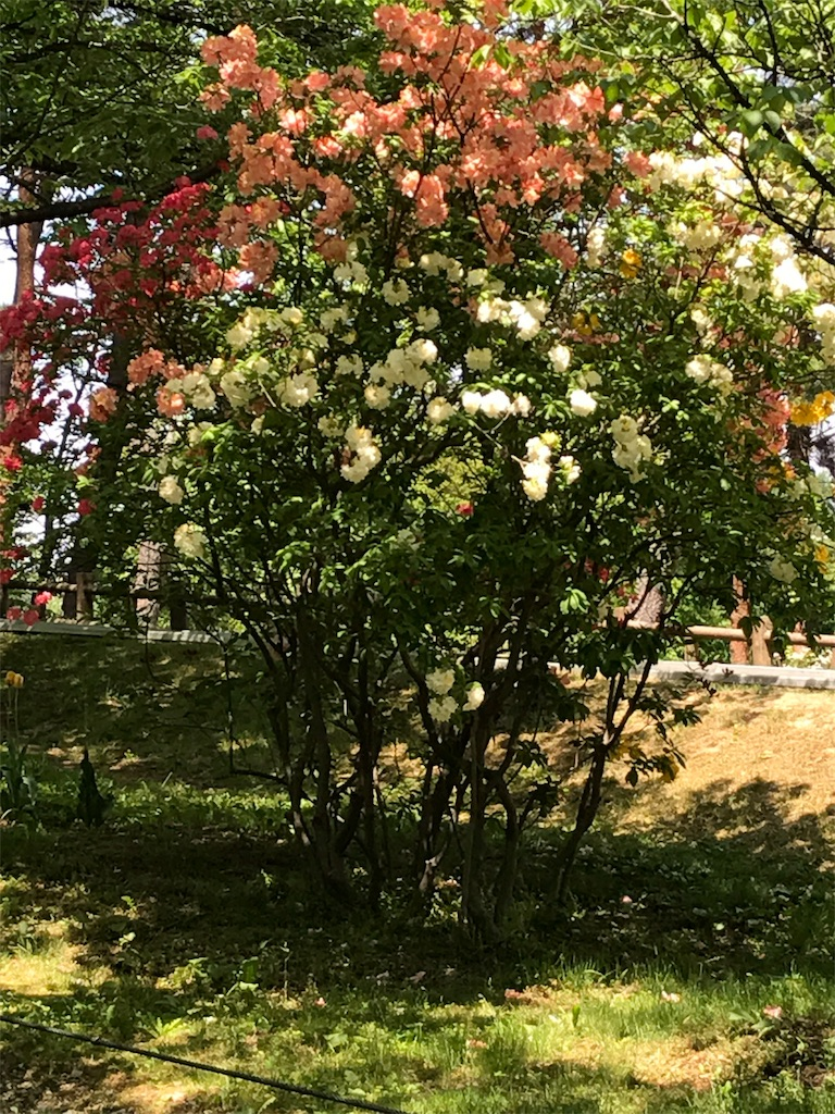 f:id:hatakofuru:20170524120508j:image