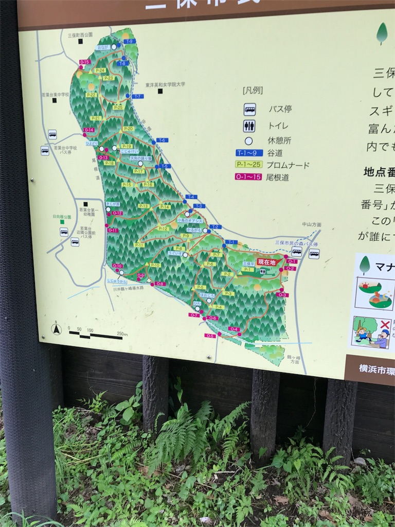 f:id:hatakofuru:20170701160922j:image