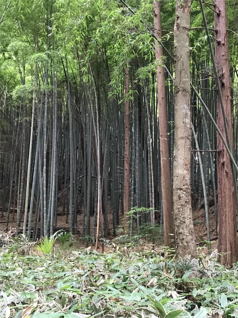 f:id:hatakofuru:20170702063444j:image