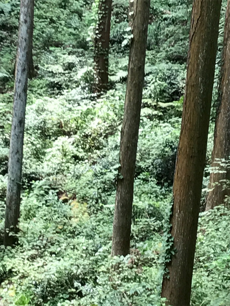 f:id:hatakofuru:20170725174627j:image