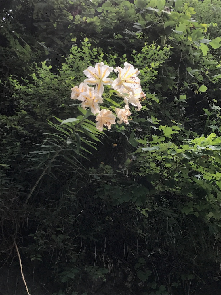 f:id:hatakofuru:20170726220928j:image