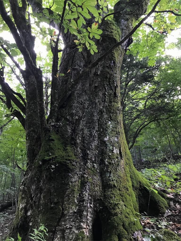 f:id:hatakofuru:20170920153239j:image