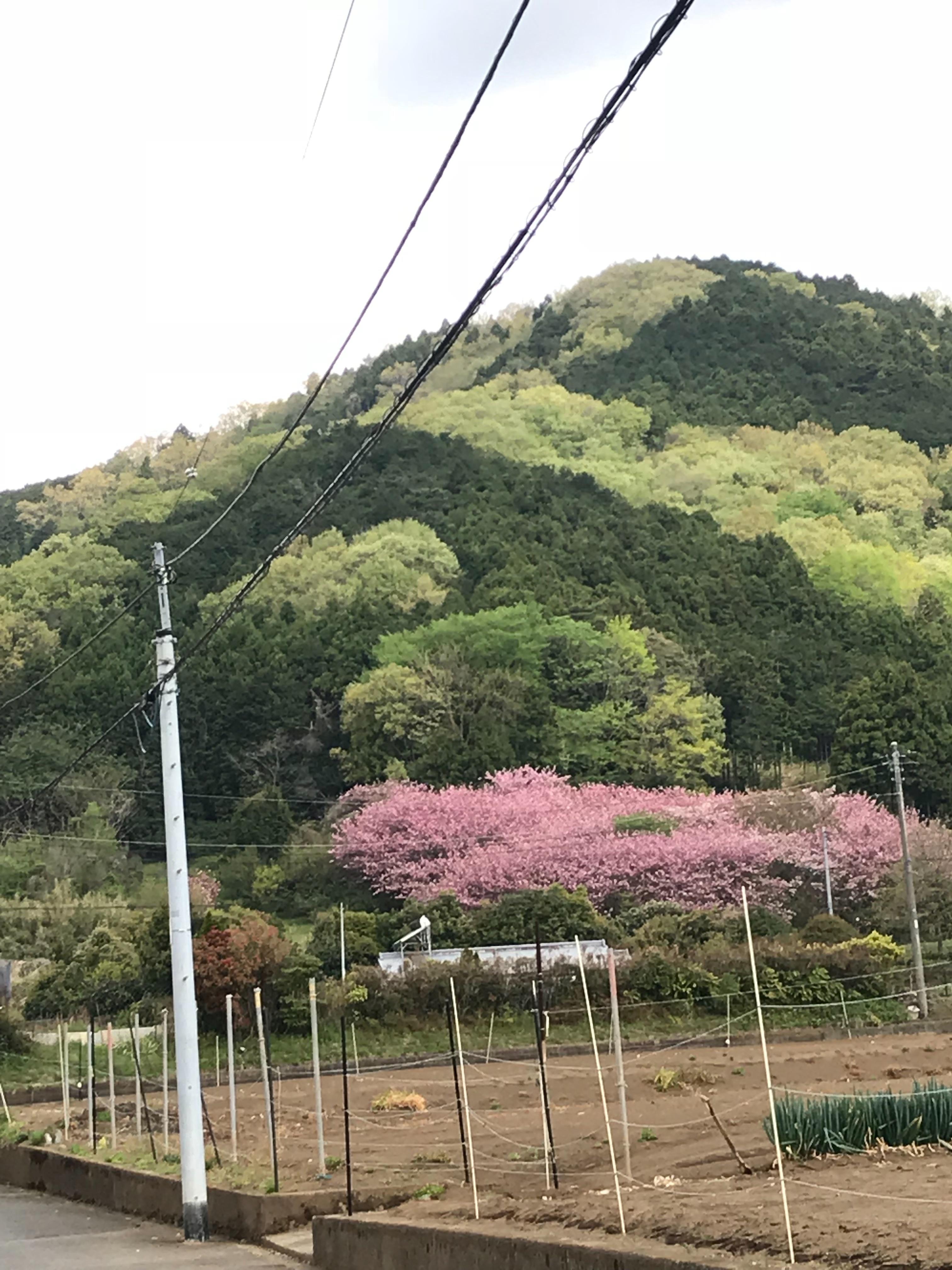 f:id:hatakofuru:20180416113548j:image