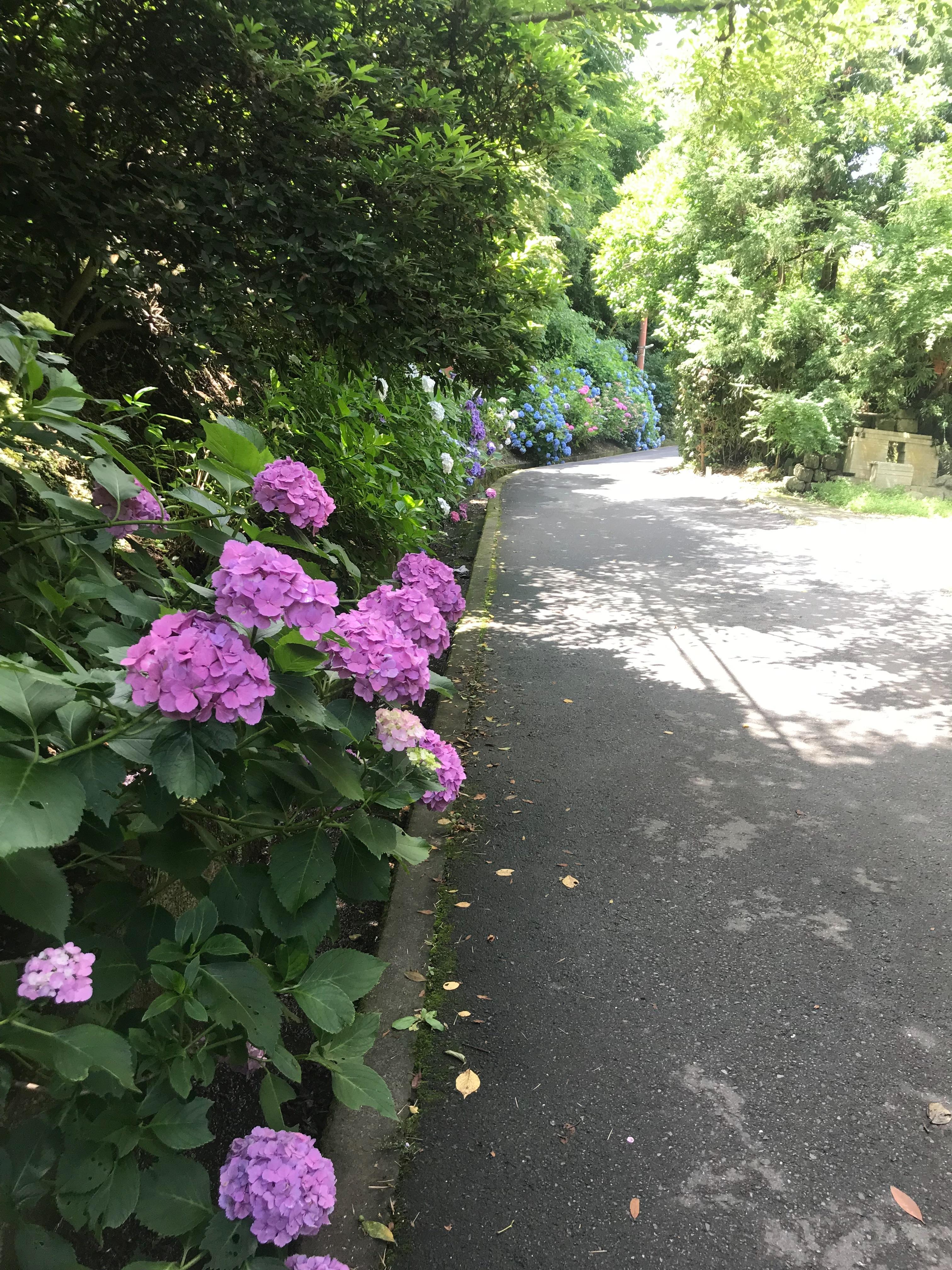 f:id:hatakofuru:20180621115839j:image