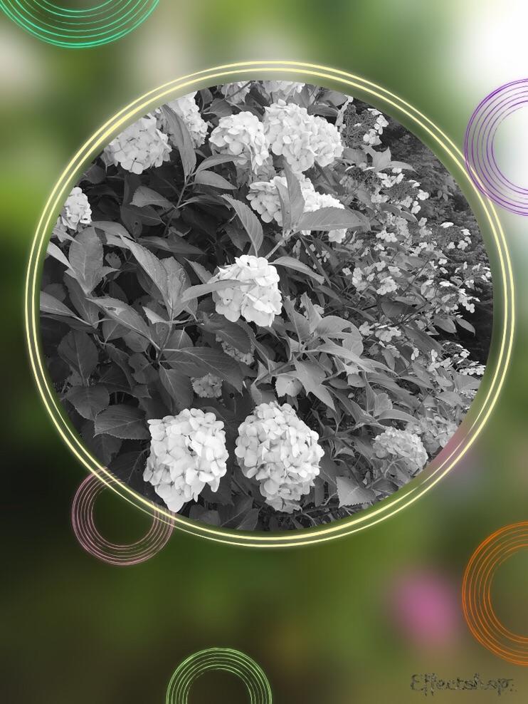 f:id:hatakofuru:20180627122338j:image