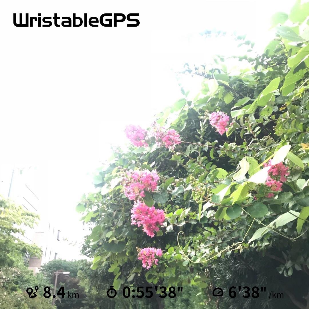 f:id:hatakofuru:20180722083247j:image