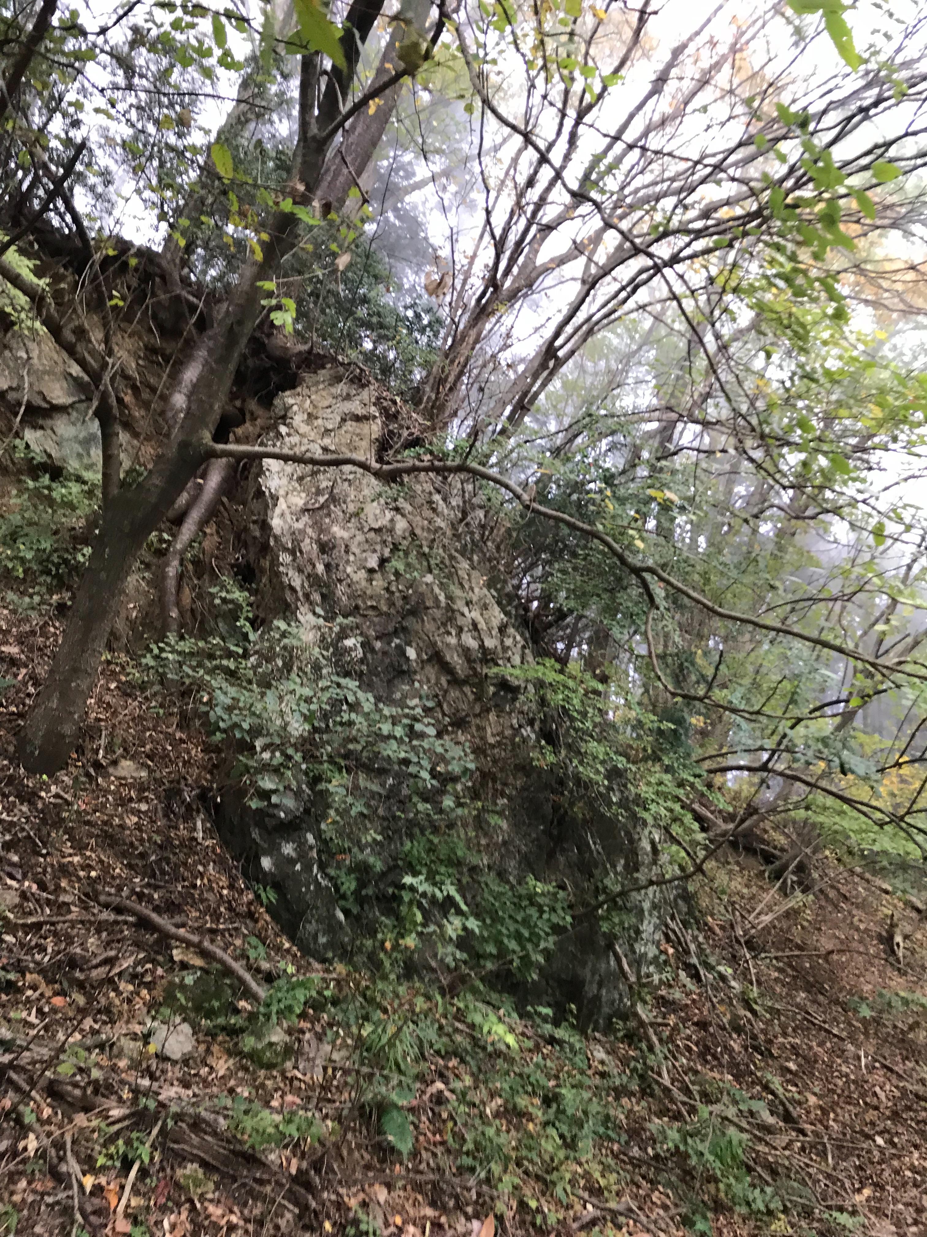 f:id:hatakofuru:20181105124501j:image