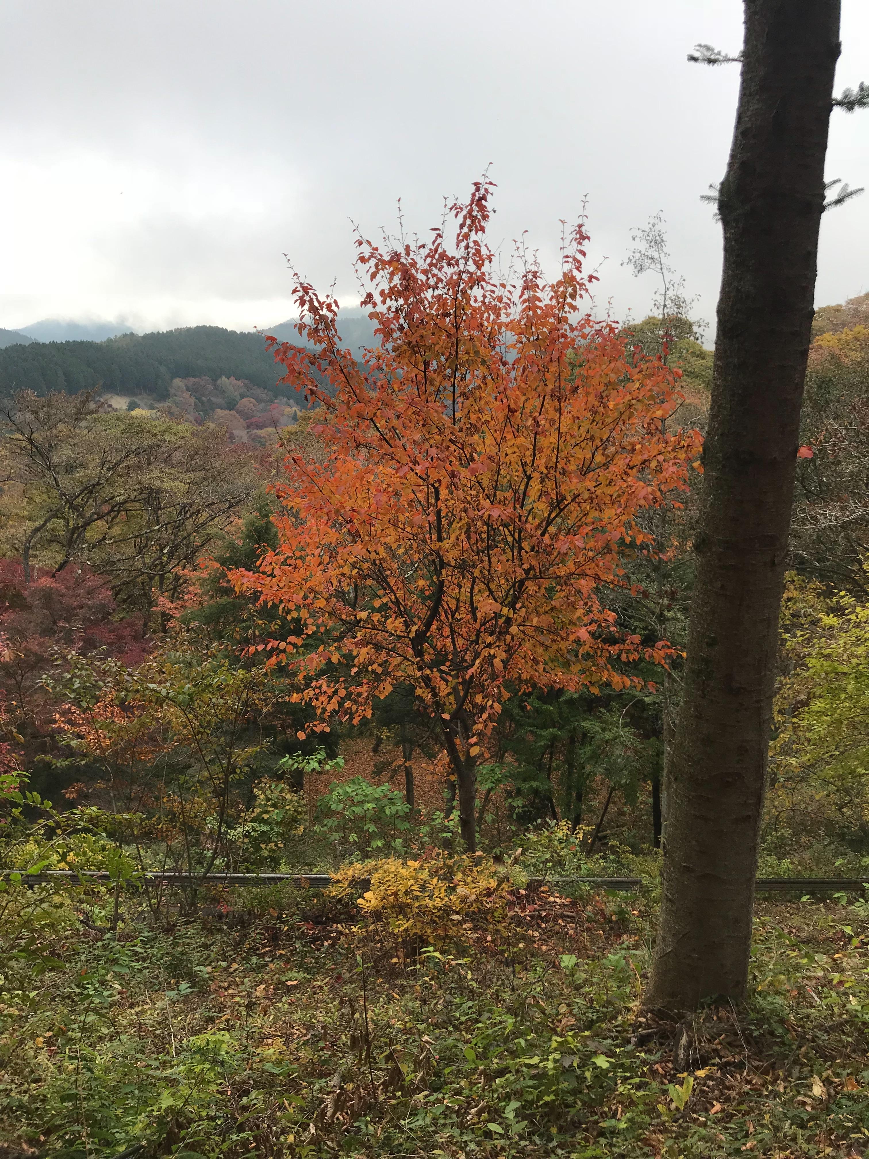 f:id:hatakofuru:20181105212722j:image