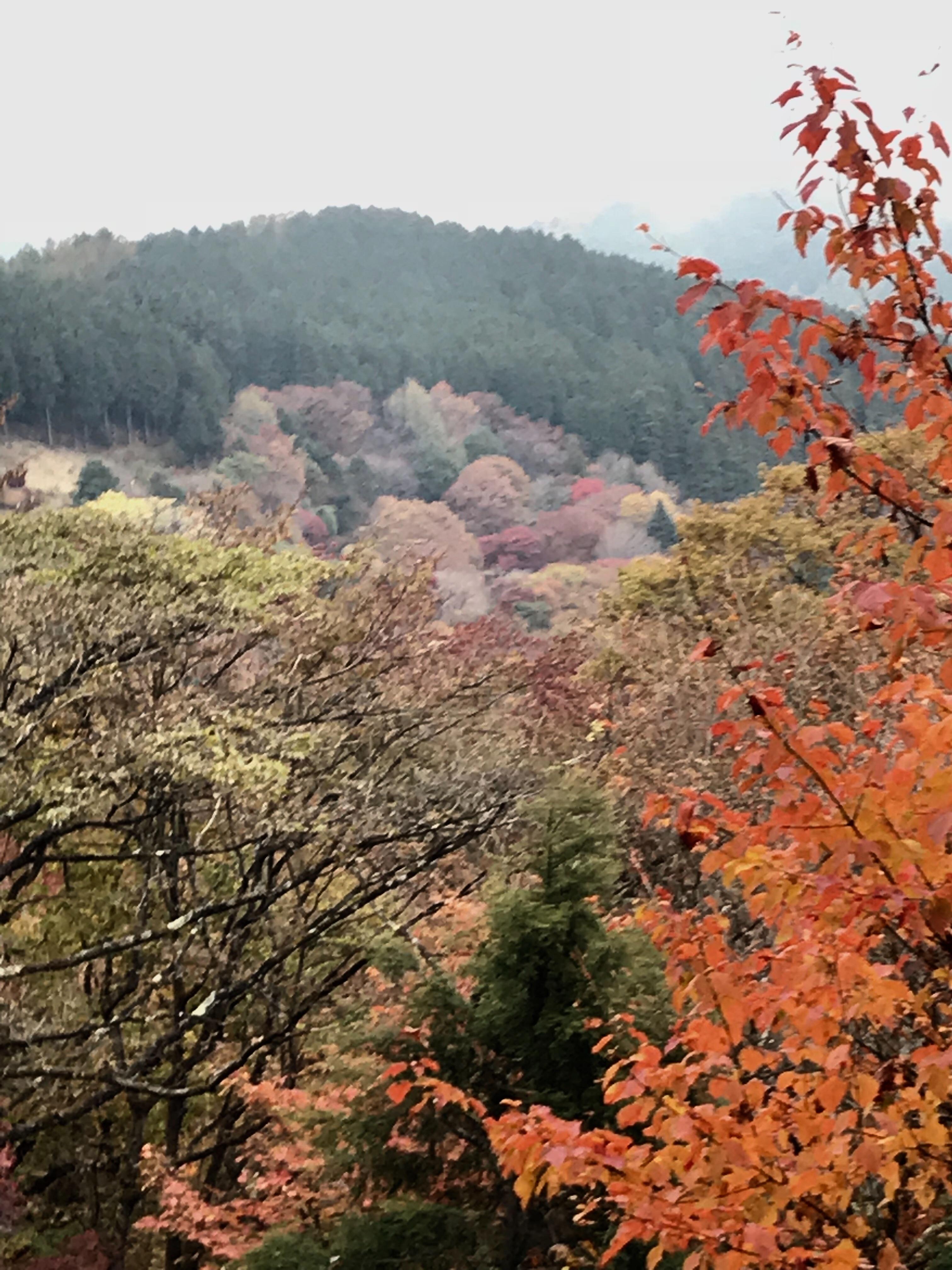 f:id:hatakofuru:20181105221143j:image