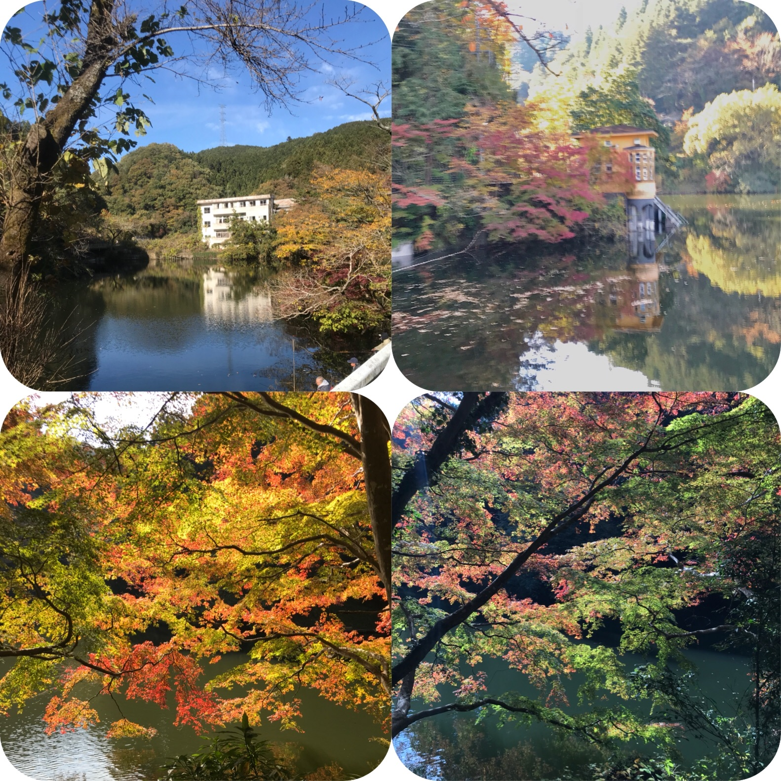 f:id:hatakofuru:20181118165721j:image