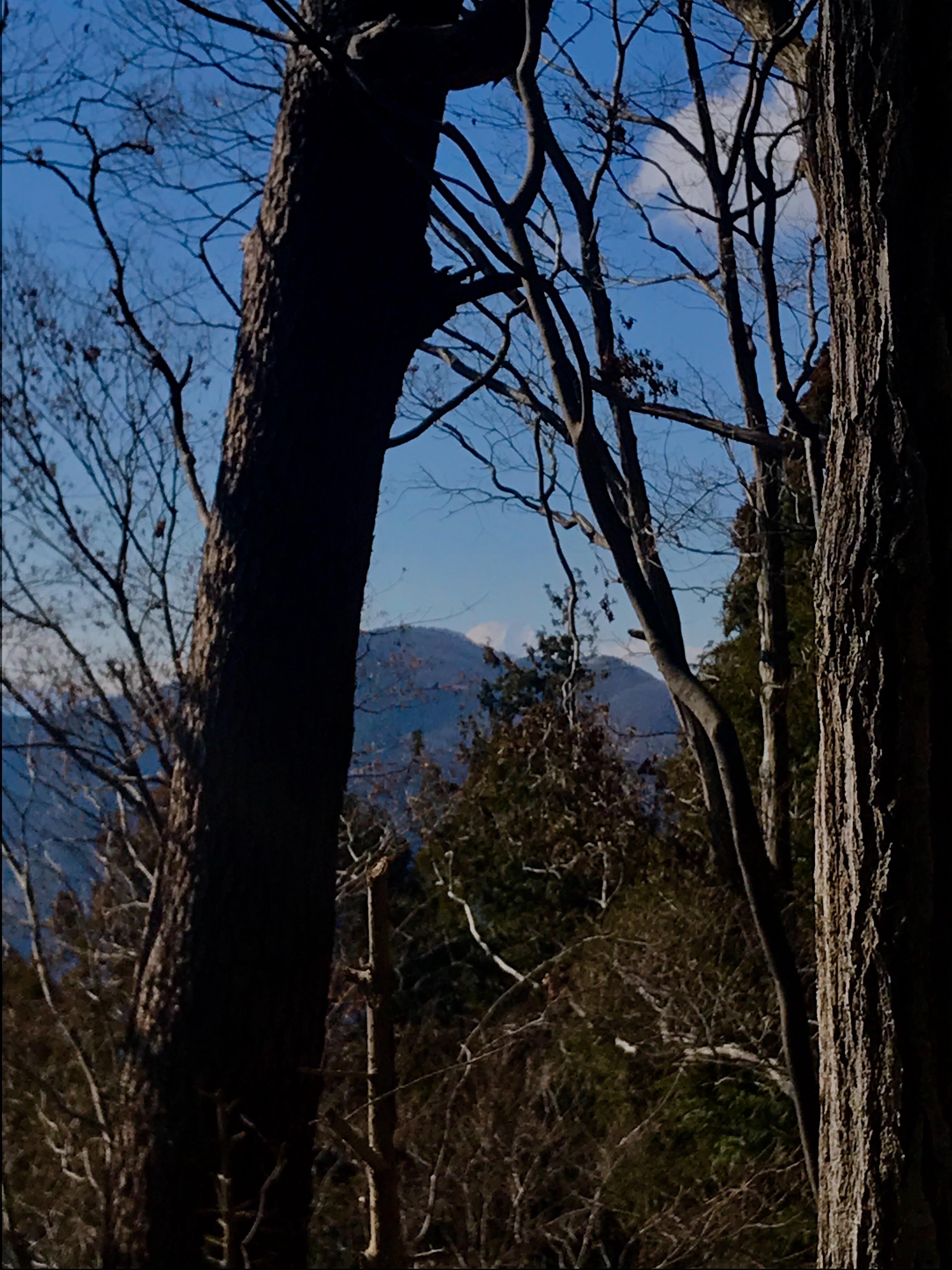 f:id:hatakofuru:20190115201308j:image
