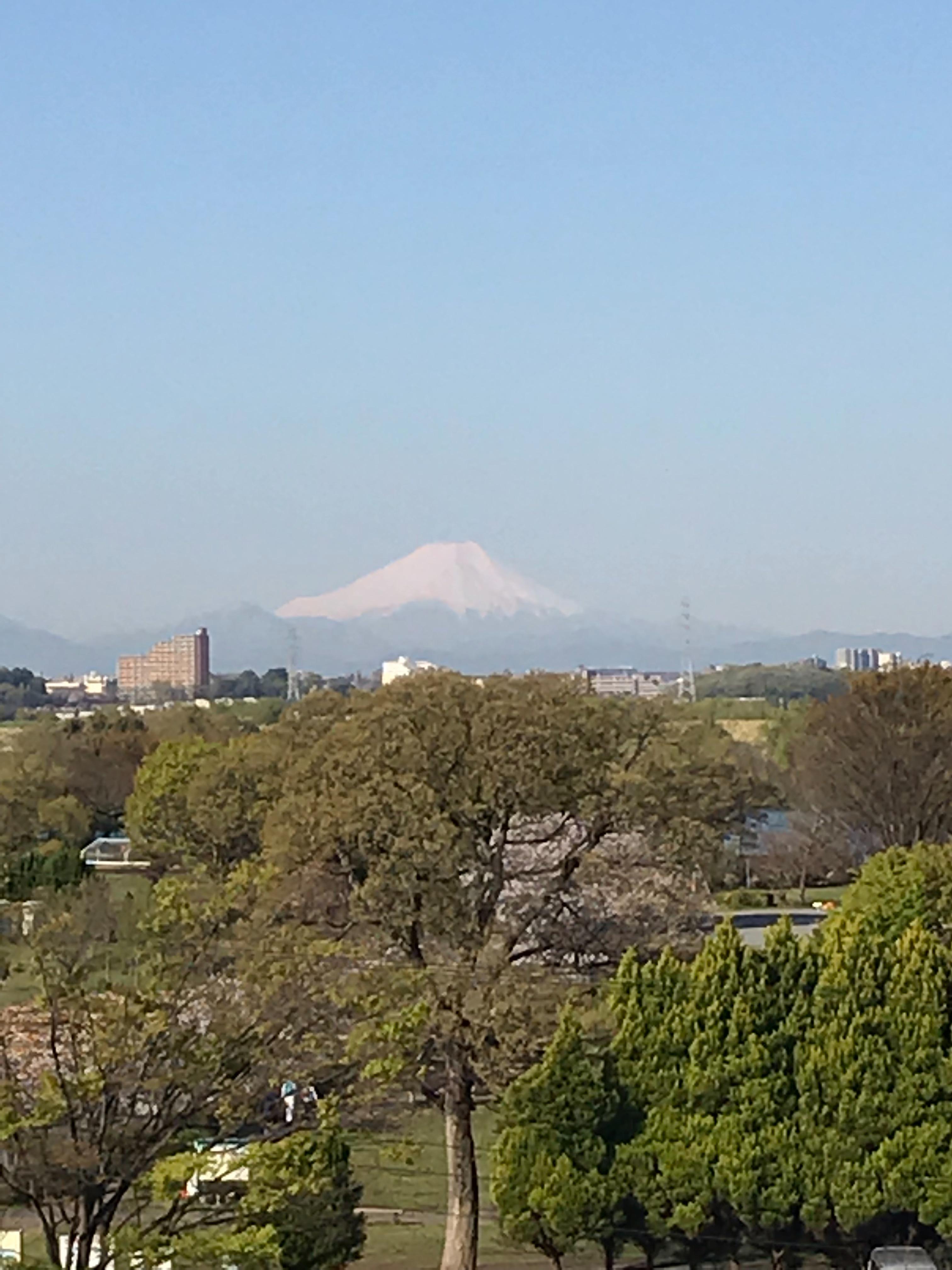 f:id:hatakofuru:20190414191517j:image