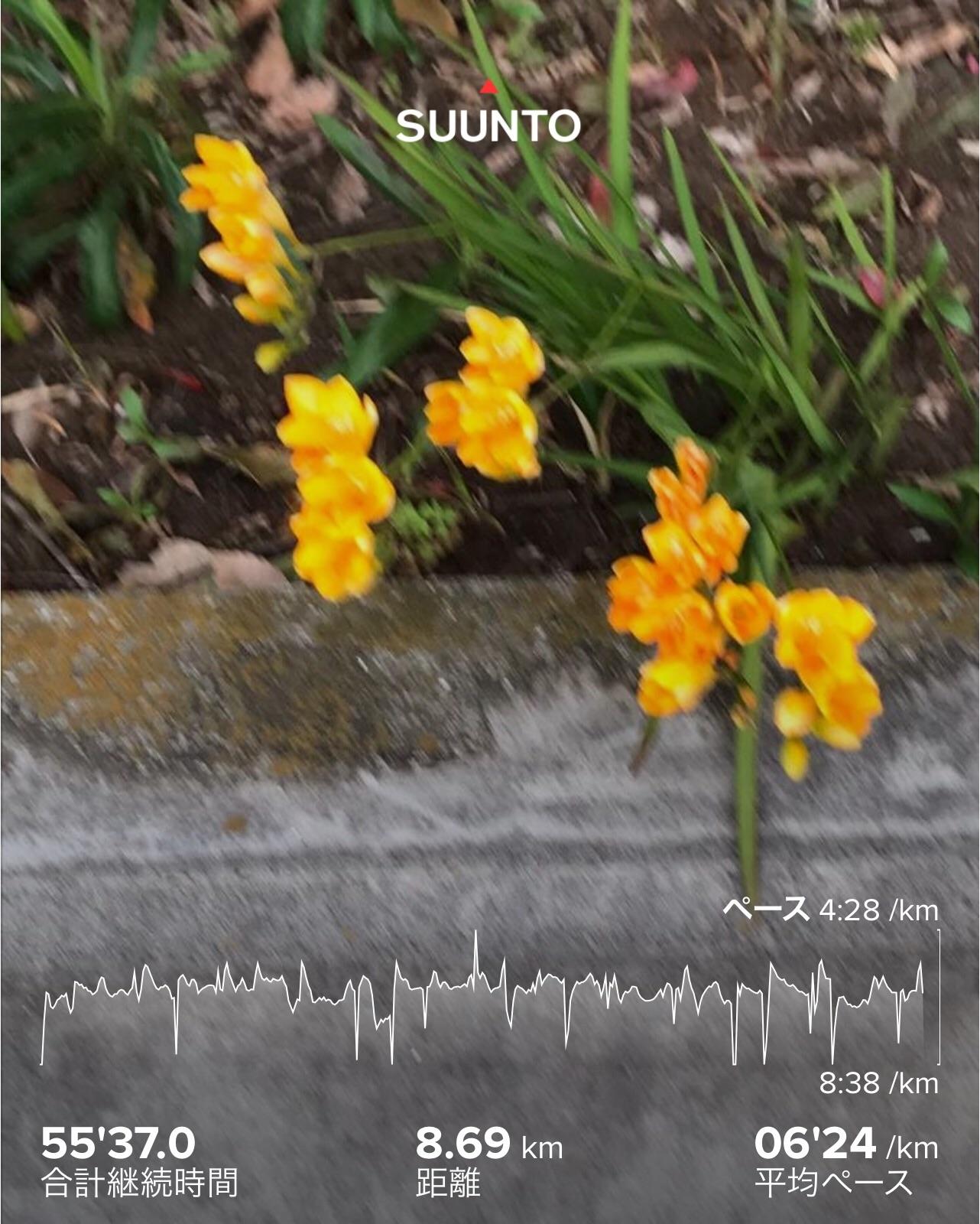 f:id:hatakofuru:20200325081130j:image