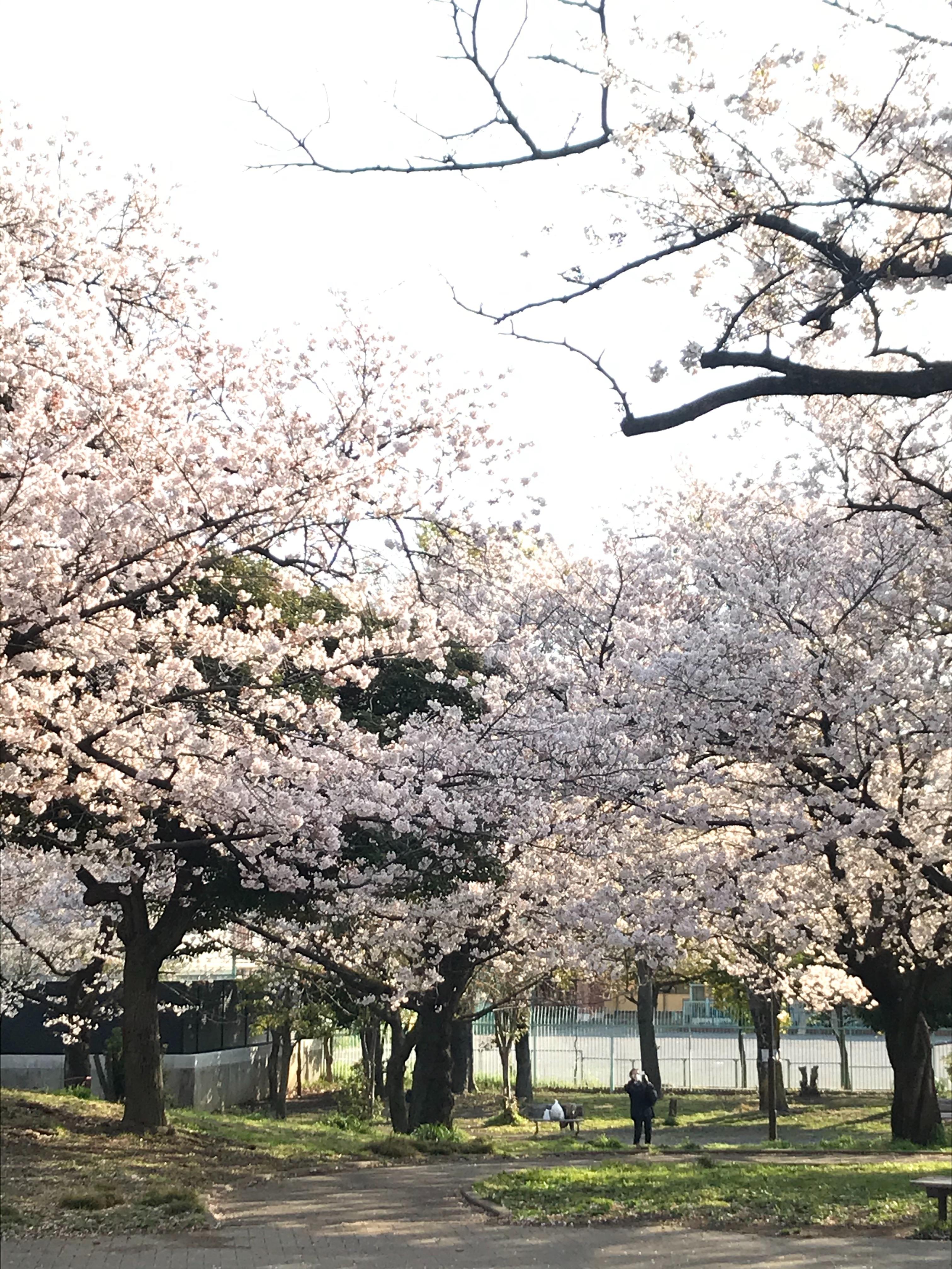 f:id:hatakofuru:20200404200646j:image