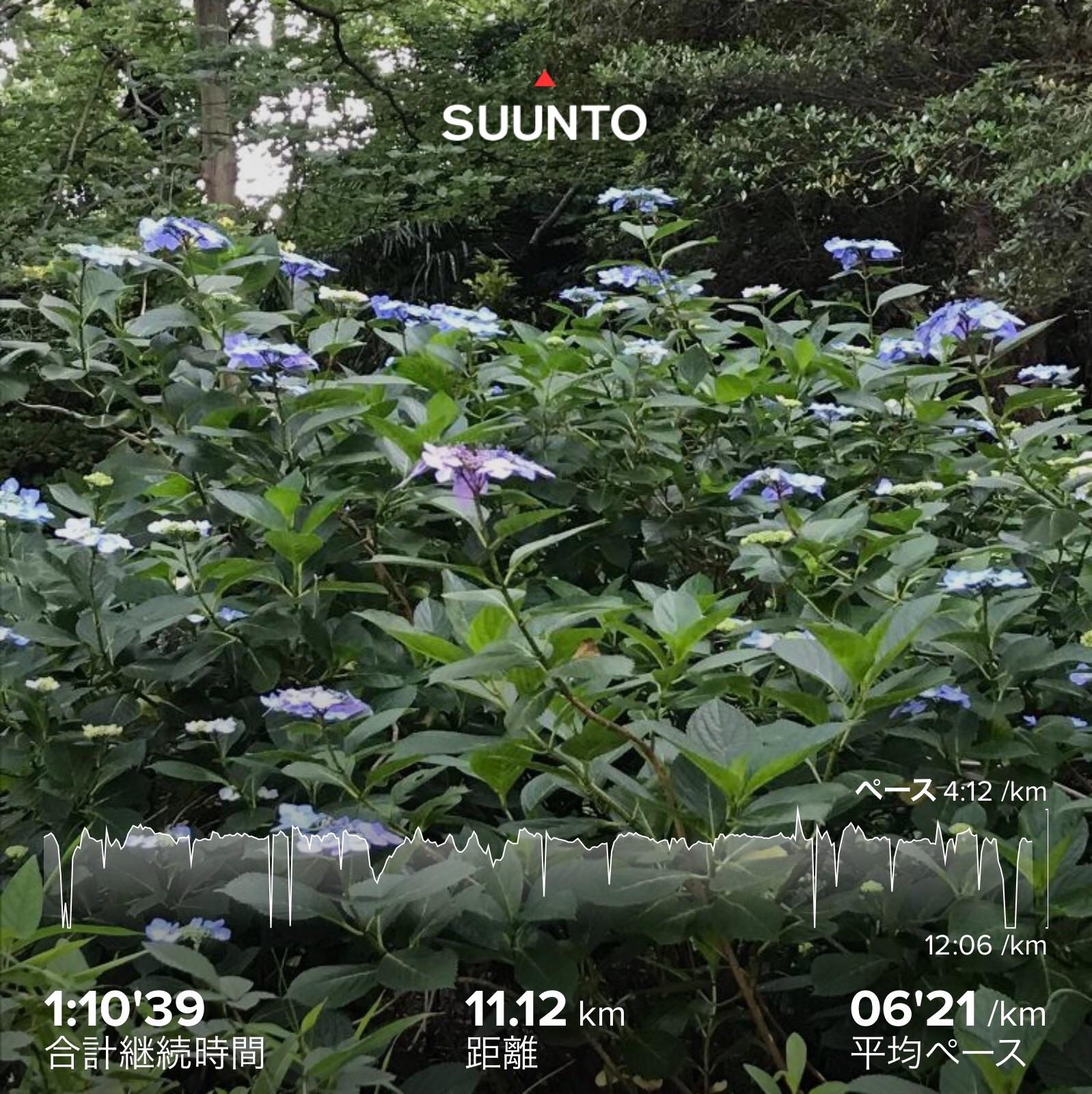 f:id:hatakofuru:20200612153931j:image