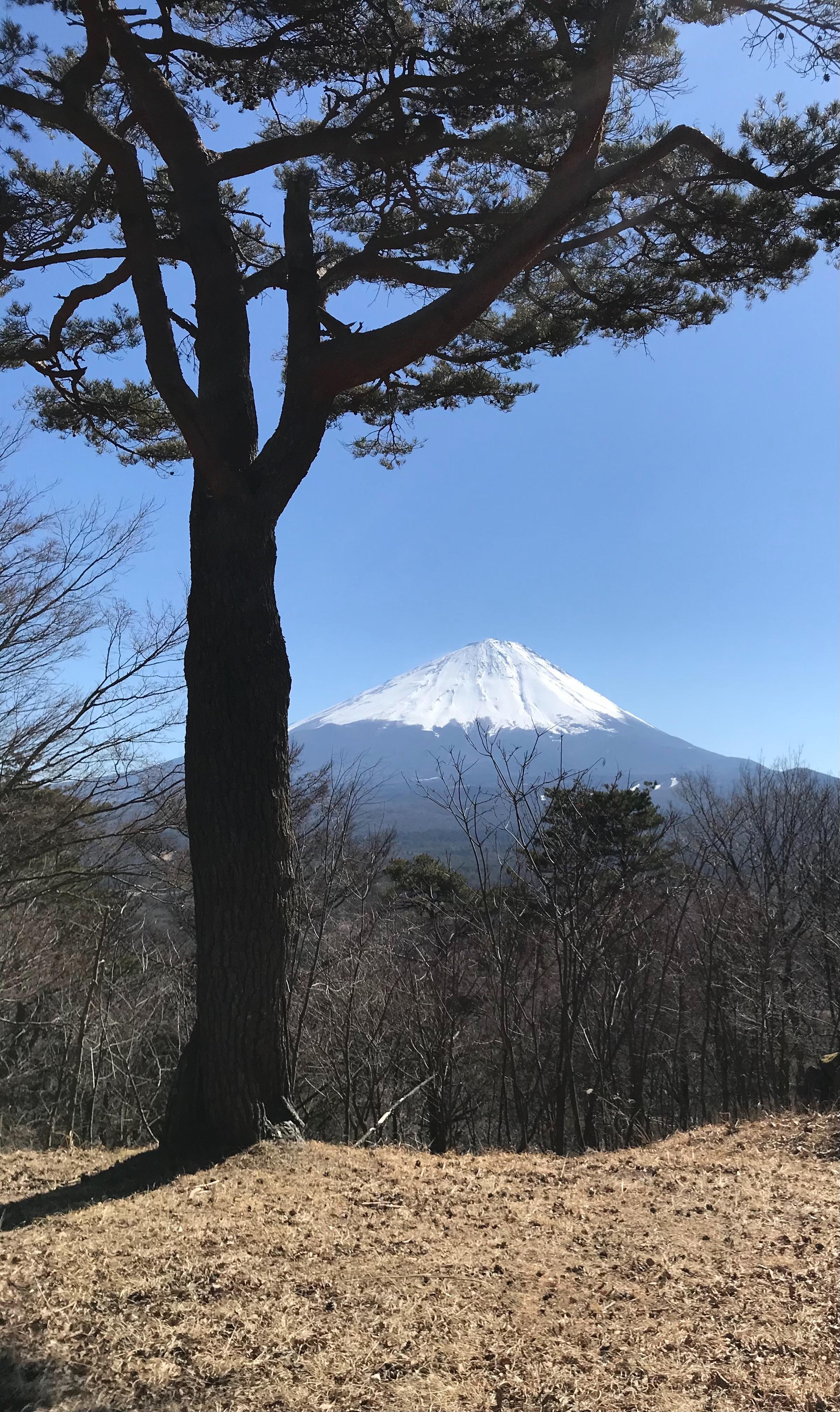 f:id:hatakofuru:20210222121104j:plain