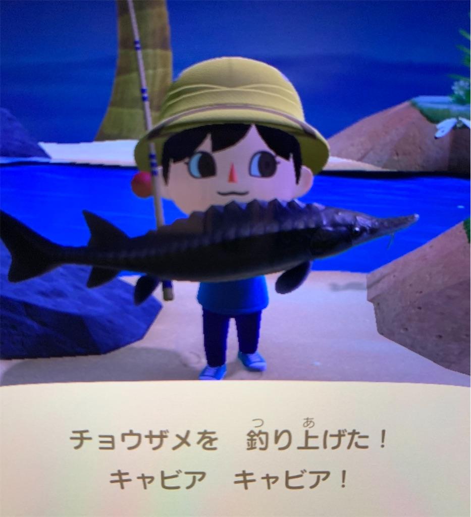 あつ森 ミノカサゴ 魚影