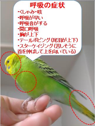 f:id:hatarakitakunai30:20210428155922p:plain