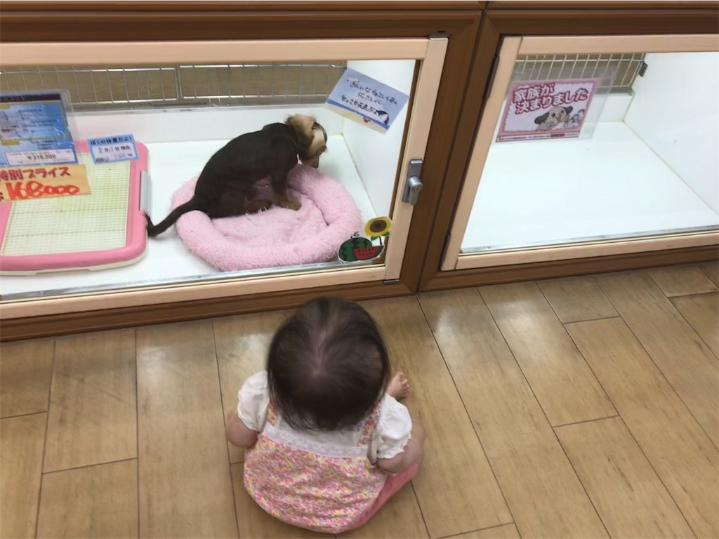 f:id:hatarakumama_aco:20190825072408j:image