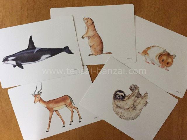 ほ乳類カード(動物)のフラッシュカード