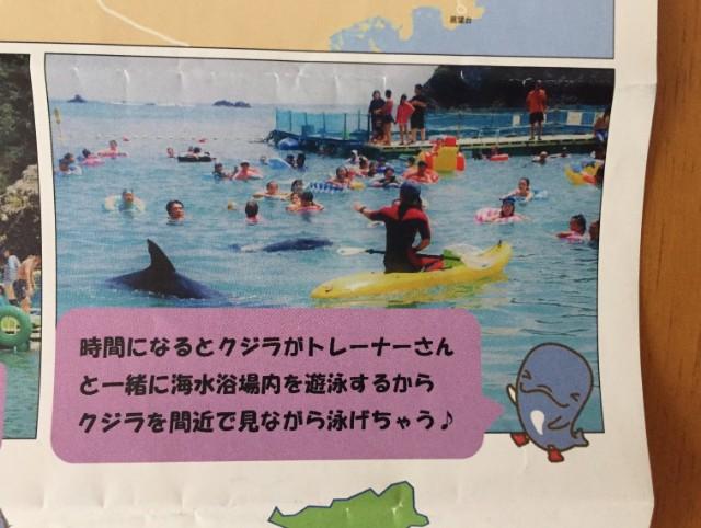 くじら浜海水浴場チラシ裏面
