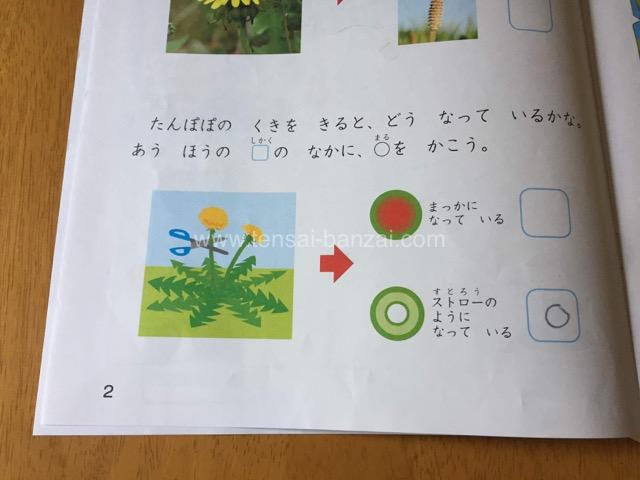 Z会幼児コース:かんがえるちからワーク