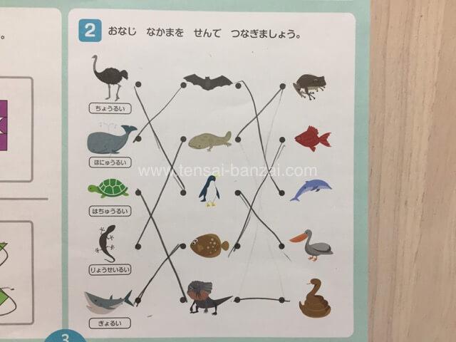 イクウェル 動物をグループに分ける問題