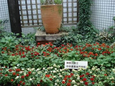 f:id:hatekota810:20091010044514j:image