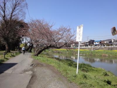 f:id:hatekota810:20100328200845j:image
