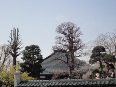 f:id:hatekota810:20100416050531j:image